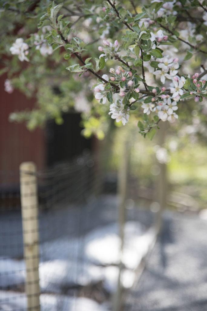 råddjursäkra trädgården
